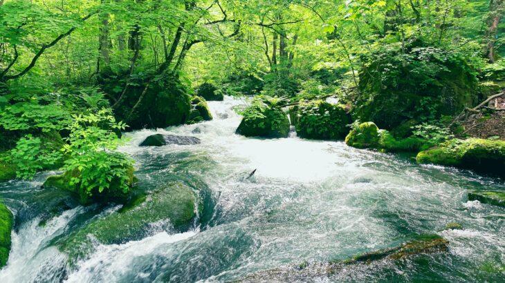 【新緑の街道】木漏れ日美しい奥入瀬渓流をサイクリング!